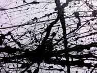 Detailaufnahme Abstraktes Acrylgemälde in schwarz weiß modern